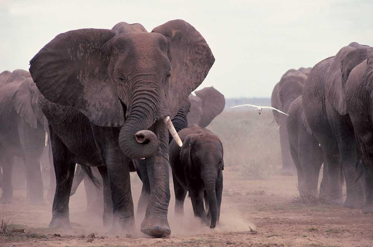 Africa – The Big 5 Credit Kenya Tourist Board